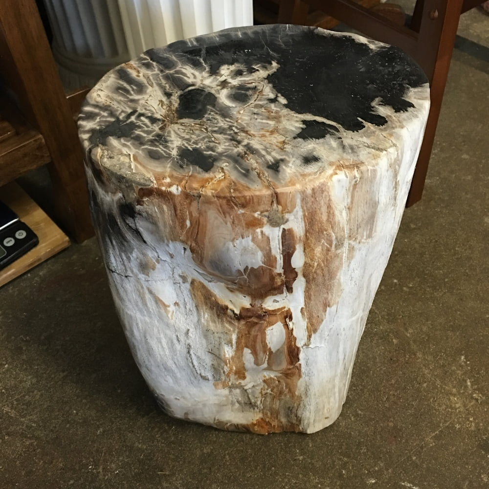 """#14 Petrified Wood  Table Or Pedestal Or Stool 15.7"""" H  x 9.8"""" W 68 lbs"""