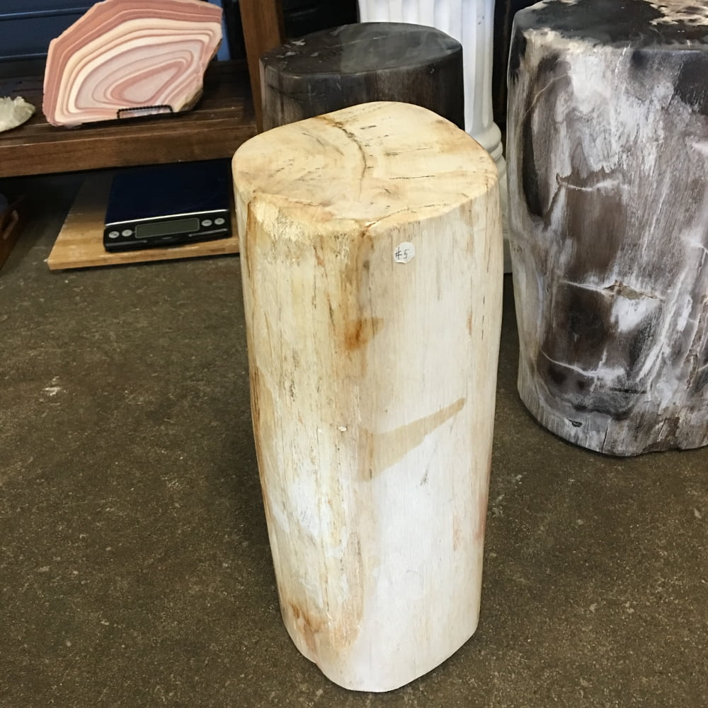"""#5 Petrified Wood Table Or Pedestal Or Stool 15.35"""" H  x 7.5"""" W 50 lbs"""