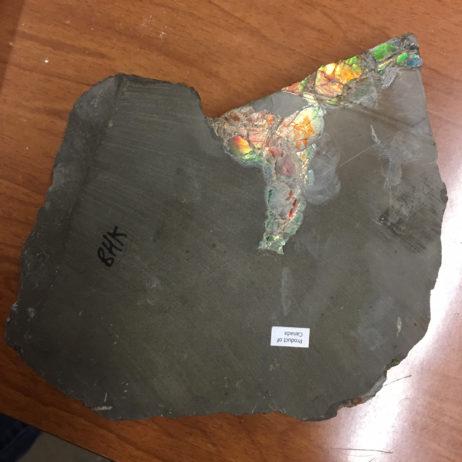 Ammolite/Aapoak/Ammonite