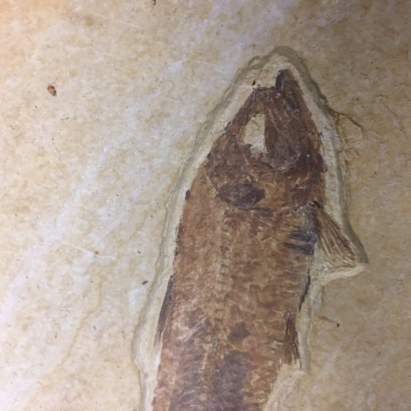 Fossil Fish, Wyoming