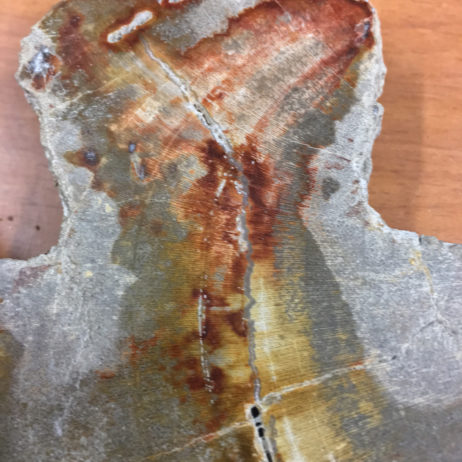 Petrified Wood Slab/Slice