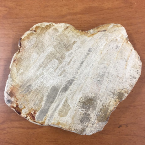 Indonesian Petrified Wood Slice/Slab