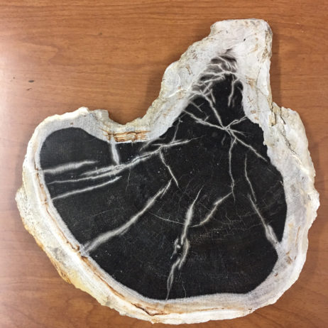 Indonesian Petrified Wood Slice/Slab