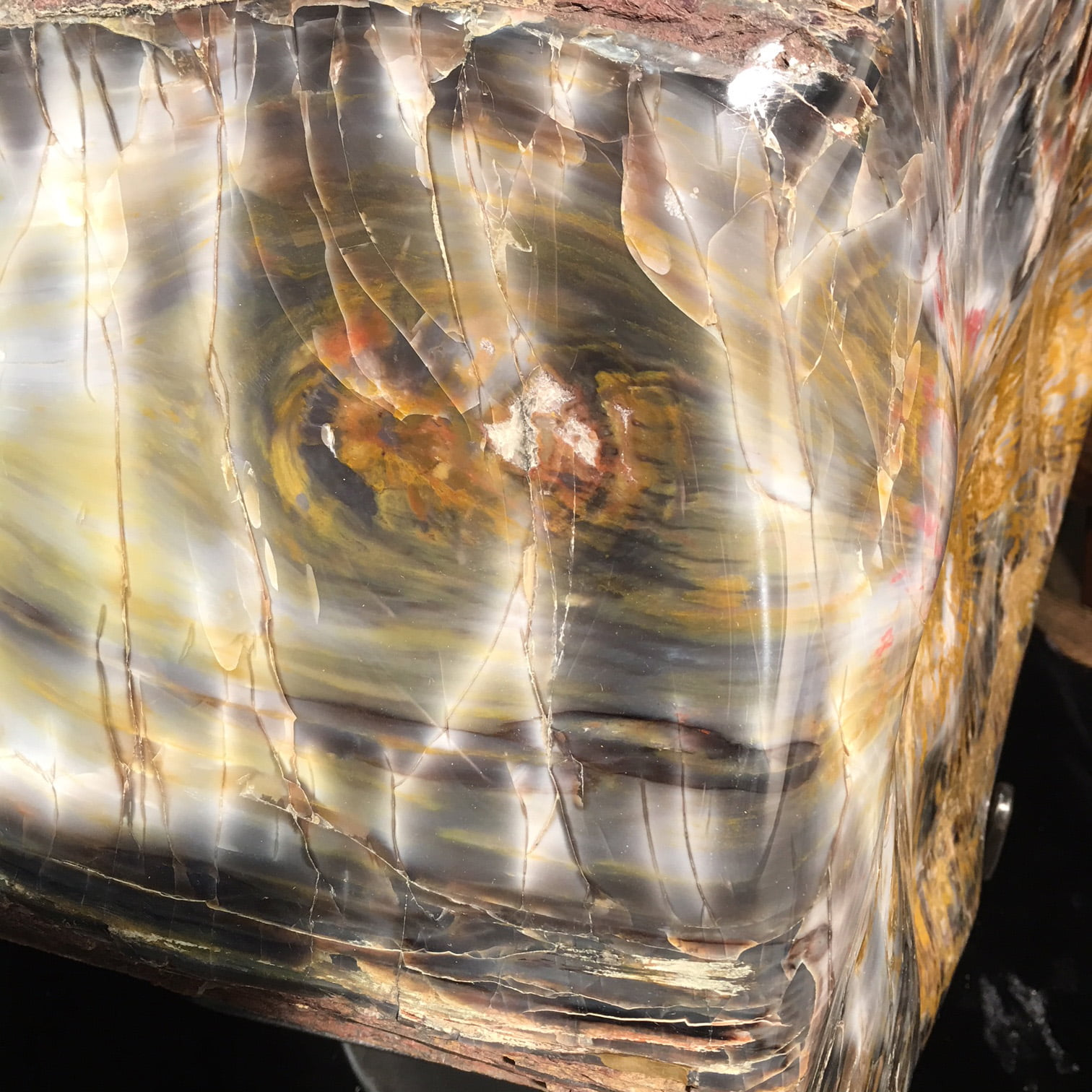 #A6 Museum Arizona Petrified Wood Sculpture Hand Polished With Yellow Starburst & Knot - 120 Lbs