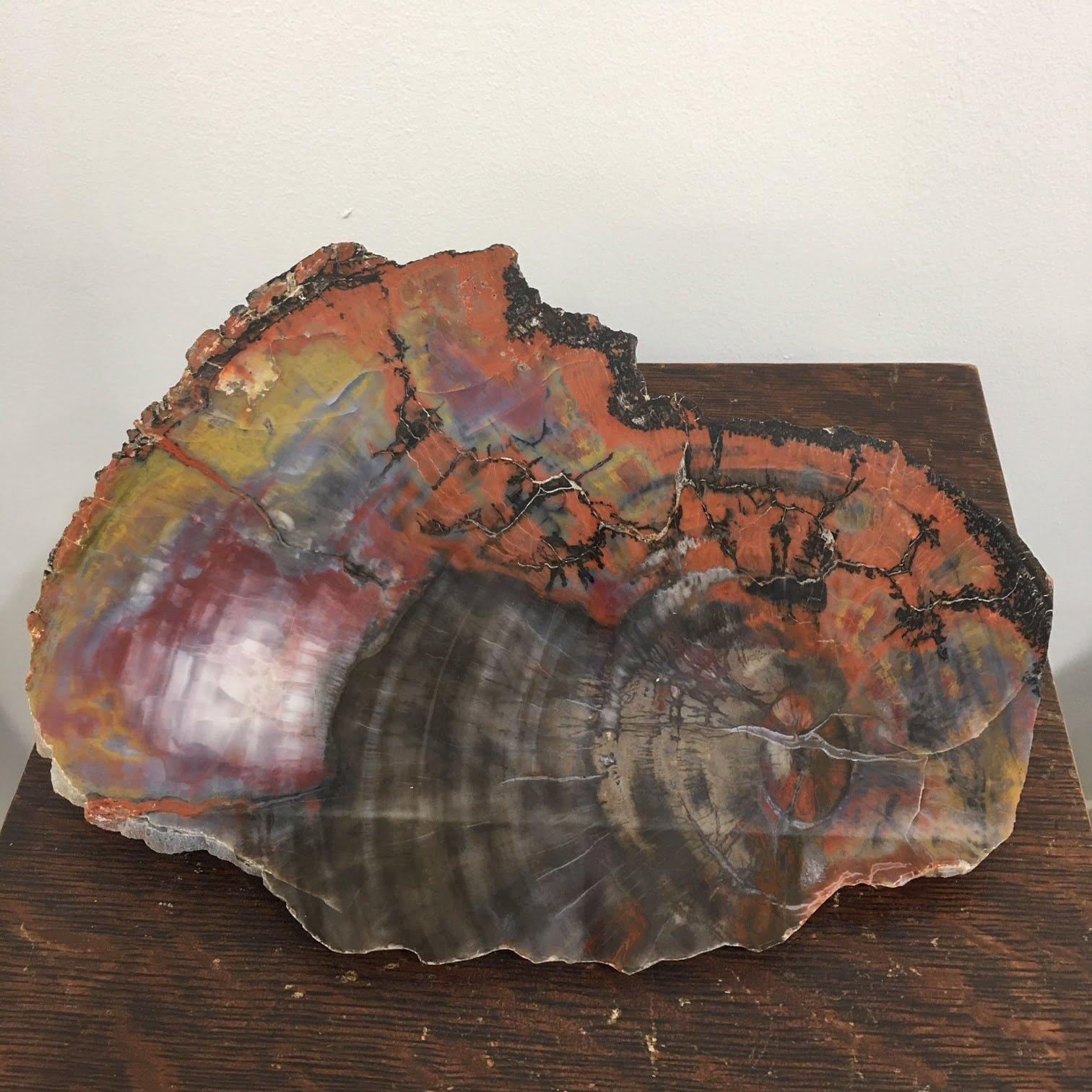 #A17 Arizona Rainbow Petrified Wood End Cut Museum Quality