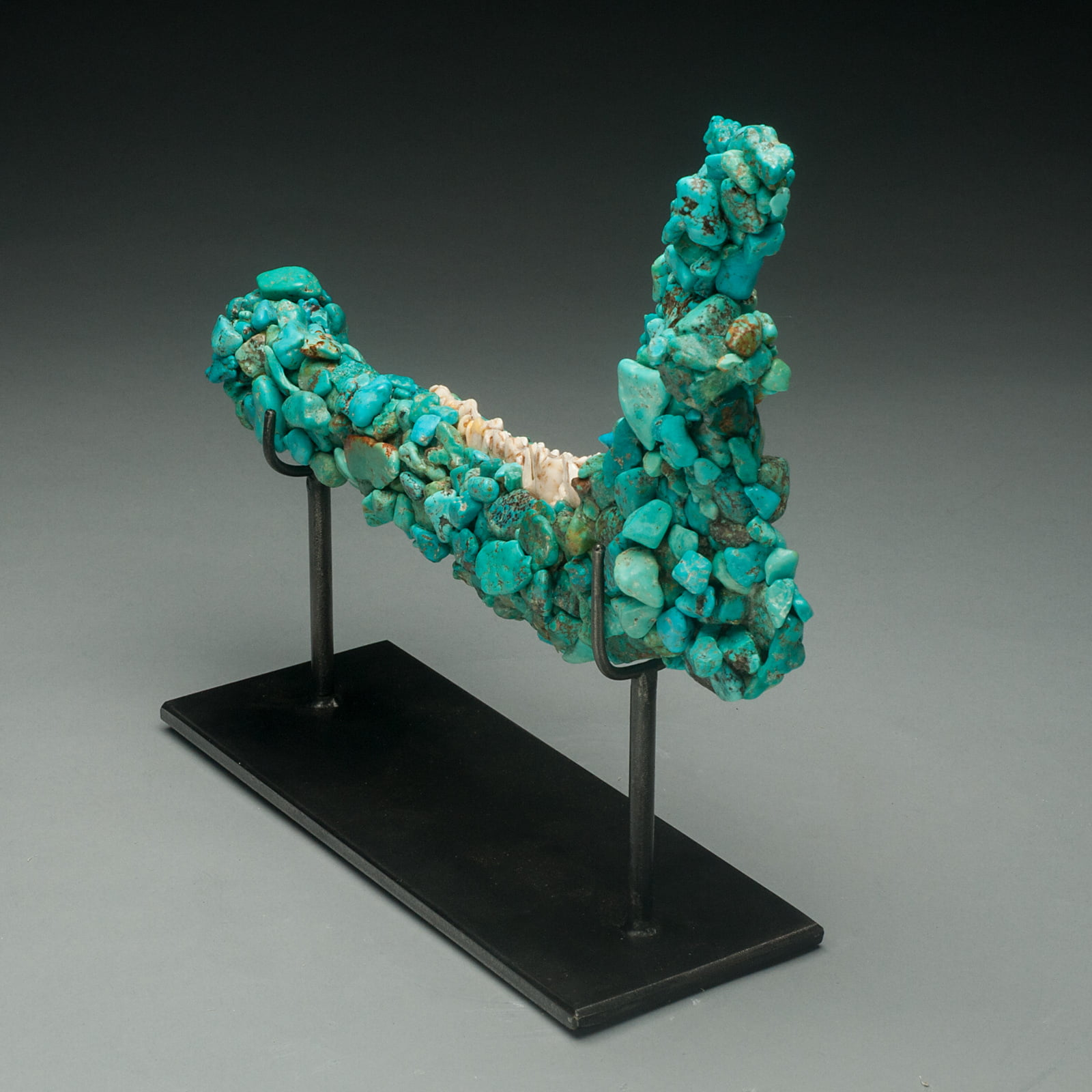 #TURQDEER1 Rare Turquoise Encrusted Mule Deer Jaw on a Custom Made Stand