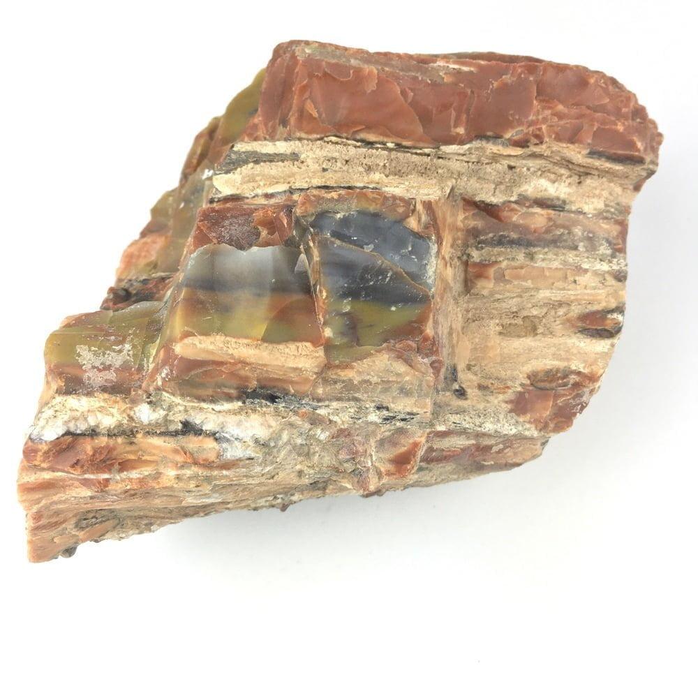Arizona Rainbow Petrified Wood A16-#A16-4