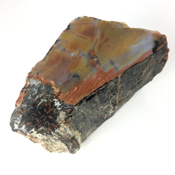 Arizona Rainbow Petrified Wood A20-#A20-1