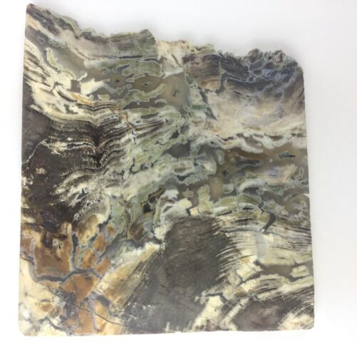 Mcdermitt Petrified Algae Wood Moss Agate PWS1-#PWS1-1