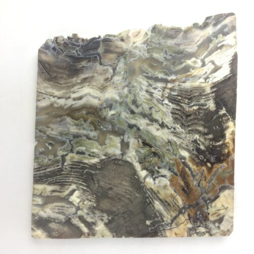 Mcdermitt Petrified Algae Wood Moss Agate PWS1-#PWS1-2