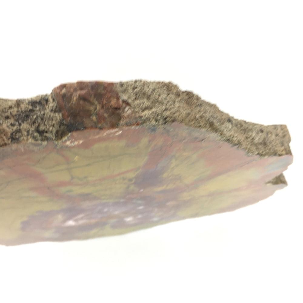 Museum Quality Arizona Rainbow Petrified Wood Polished Large Slice A32-#A32-5