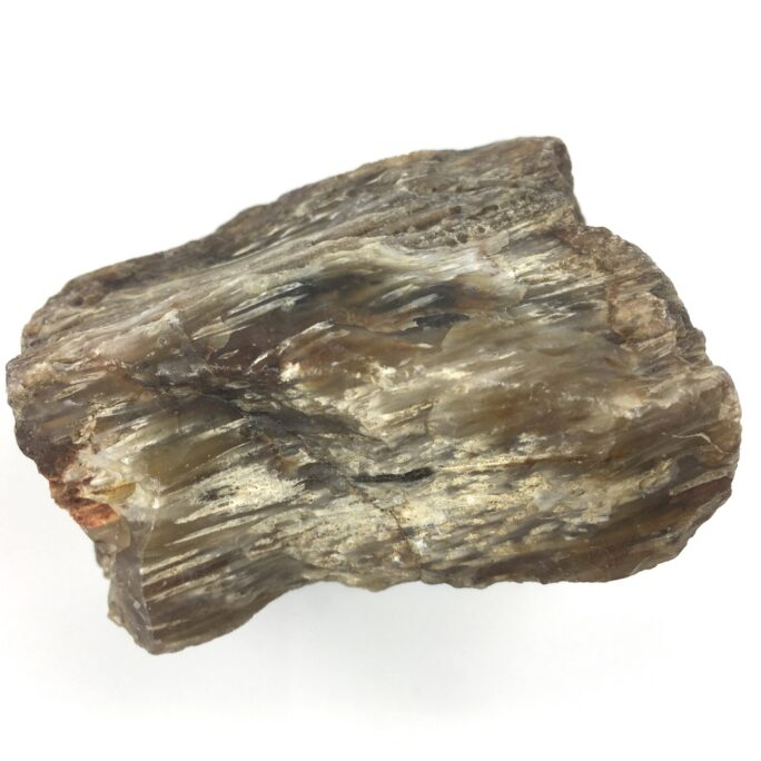 Petrified Wood PW14-#PW14-2