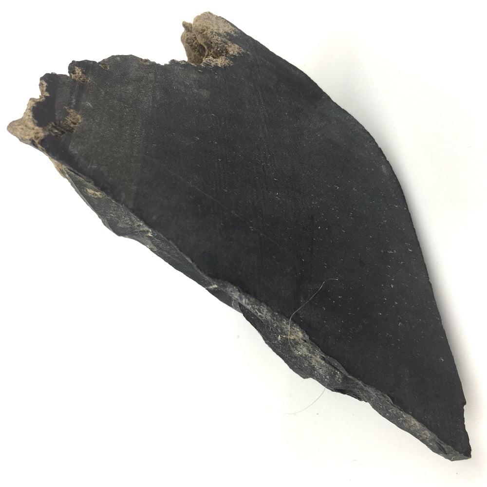 Petrified Wood Specimen Black PW15-#PW15-2