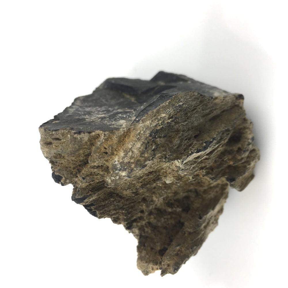 Petrified Wood Specimen Black PW15-#PW15-3