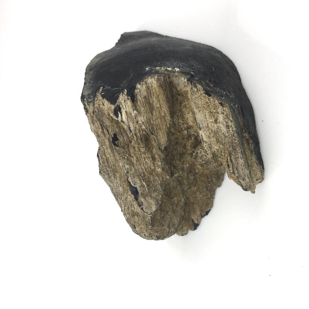 Petrified Wood Specimen Black PW15-#PW15-4